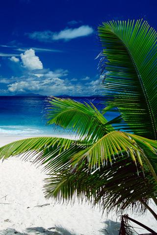 Tropical Beach iPhone Wallpaper