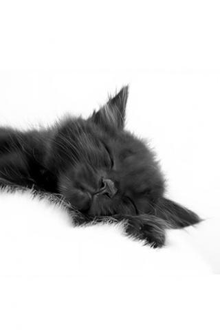 Sleeping Black Cat Iphone Wallpaper Idesign Iphone