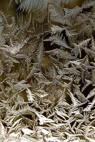 Frozen Pine Leaves iPhone Wallpaper