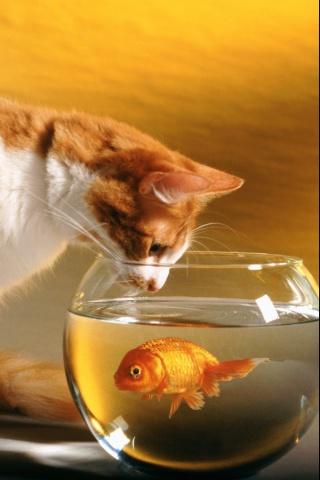 goldfish bowl and cat. Curious Cat + Goldfish