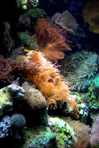 Coral Reef iPhone Wallpaper