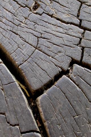 Tree Bark iPhone Wallpaper