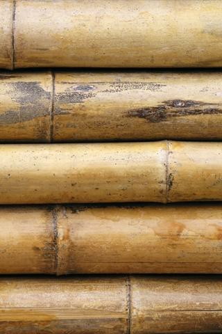 Bamboo Wall iPhone Wallpaper