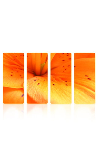 Sectioned Flower iPhone Wallpaper
