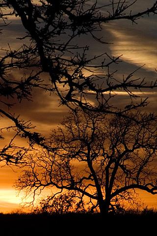 Sunset Trees iPhone Wallpaper