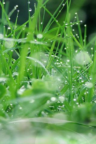 Green Grass iPhone Wallpaper