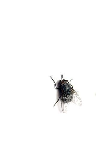 Plain Fly iPhone Wallpaper