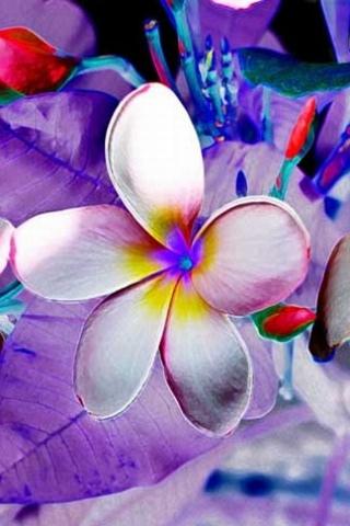 Altered Flower iPhone Wallpaper