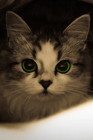 Green Eyes iPhone Wallpaper