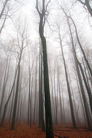 Sleeping Forest iPhone Wallpaper