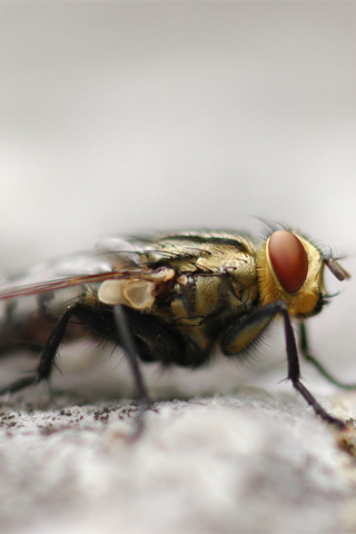 Fly iPhone Wallpaper
