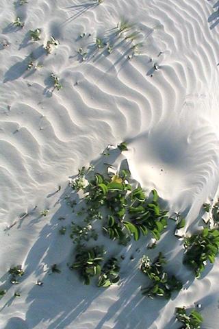 Sandslide iPhone Wallpaper