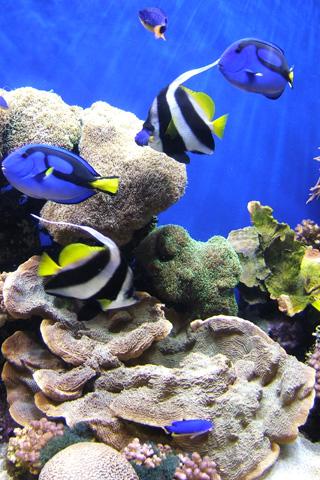 Finding Nemo IPhone Wallpaper