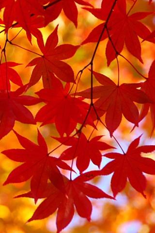 autumn iPhone Wallpaper | iDesign * iPhone : 【iPhone壁紙】秋を ...