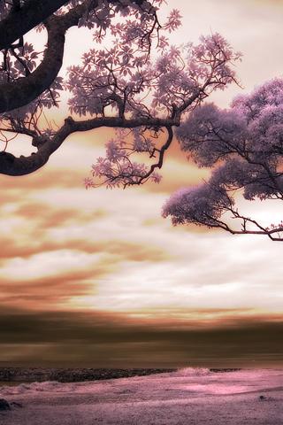 Lavender World iPhone Wallpaper