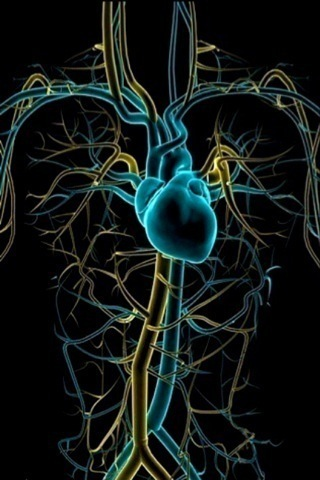 Circulatory System iPhone Wallpaper