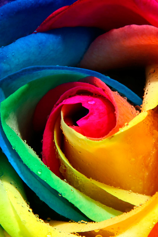 abstract wallpaper rainbow. Rainbow Flower
