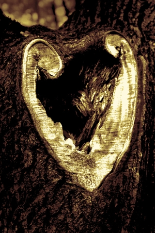 Heart-shaped Tree iPhone Wallpaper