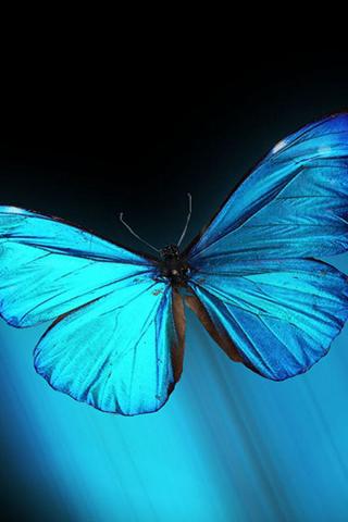 Blue Butterfly iPhone Wallpaper