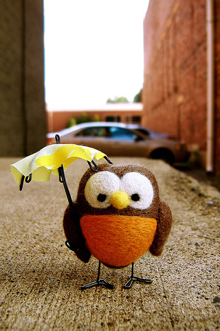 Rain Owl iPhone Wallpaper