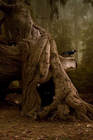 Darkwood iPhone Wallpaper