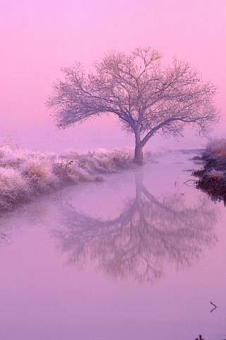 Lavender iPhone Wallpaper