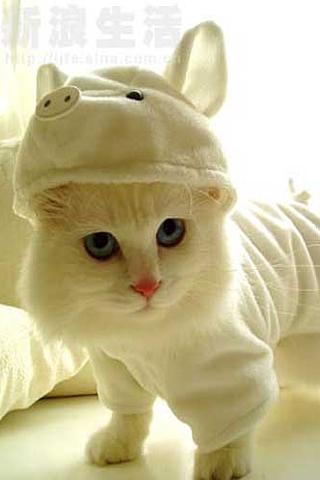 Cat in Pig Suit iPhone Wallpaper