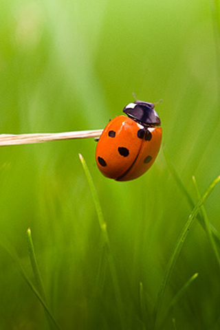 Ladybug Exercise iPhone Wallpaper