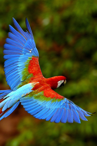 Macaw iPhone Wallpaper