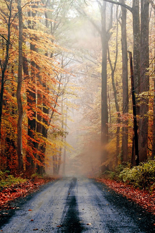 Autumn Road iPhone Wallpaper