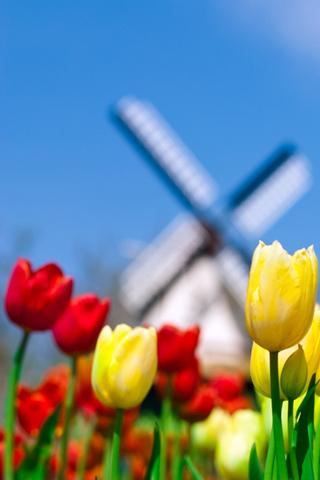 Tulip Windmill iPhone Wallpaper
