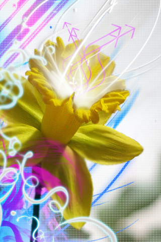Daffodill Abstract iPhone Wallpaper