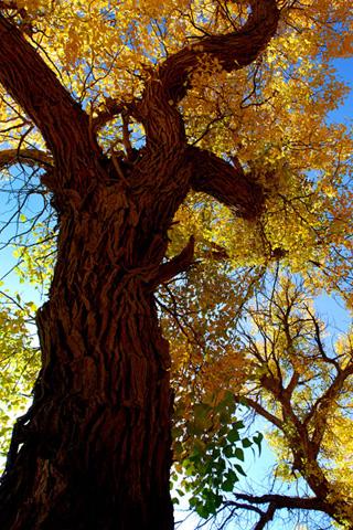 Autumn Colours iPhone Wallpaper