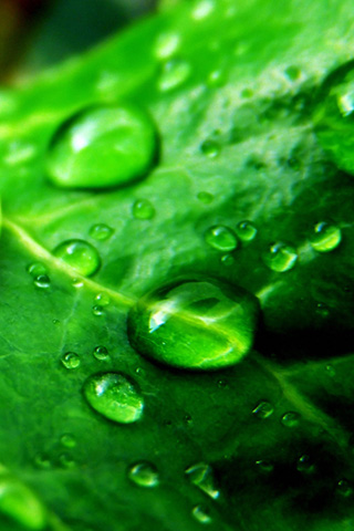 Leaf Close Up iPhone Wallpaper