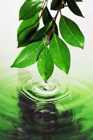 Splash of Green iPhone Wallpaper