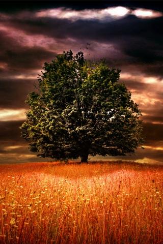 Oak Tree iPhone Wallpaper