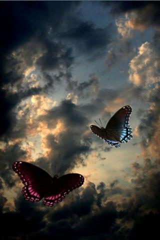 Dusk Butterflies iPhone Wallpaper