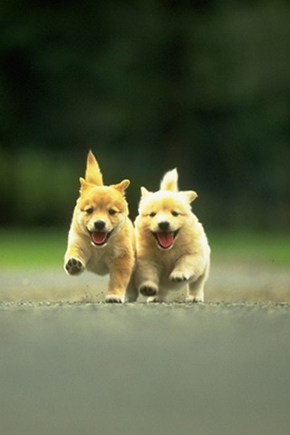 Puppy Race iPhone Wallpaper