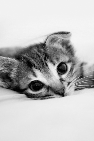 Cute Kitten iPhone Wallpaper