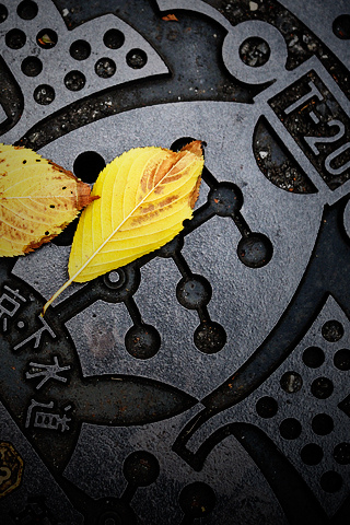 T-20 Manhole Cover iPhone Wallpaper