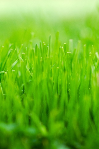 Trimmed Grass iPhone Wallpaper