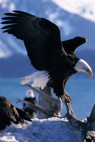 American Eagle iPhone Wallpaper
