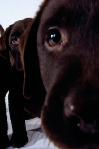 Curious Labs iPhone Wallpaper