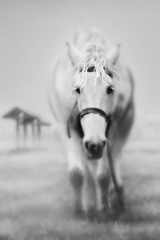 Ghostly Horse IPhone Wallpaper