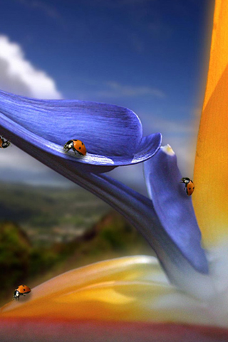 Bug Paradise iPhone Wallpaper