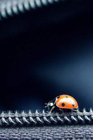 Ladybug on Zipper iPhone Wallpaper