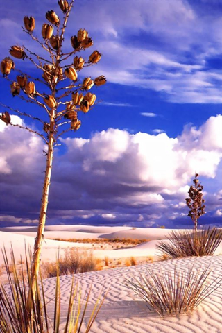 Desert Vegetation iPhone Wallpaper