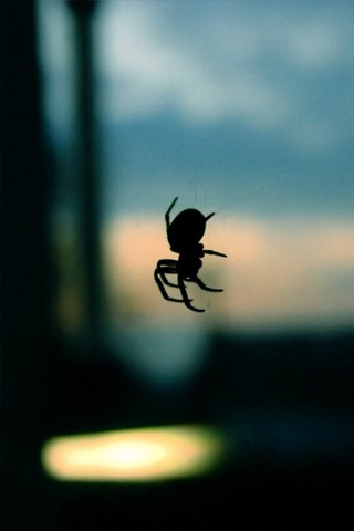 Orb Spider iPhone Wallpaper