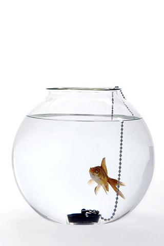 Fish Bowl iPhone Wallpaper