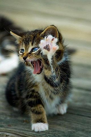 cat high five